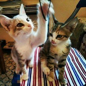 Nouga & Bambi Adoptés De Mchichates
