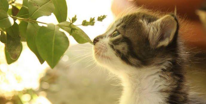 L'odorat Du Chat
