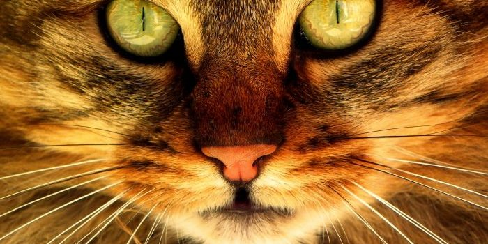 Les Sens Du Chat : L'ouïe, Le Toucher Et Le Goût