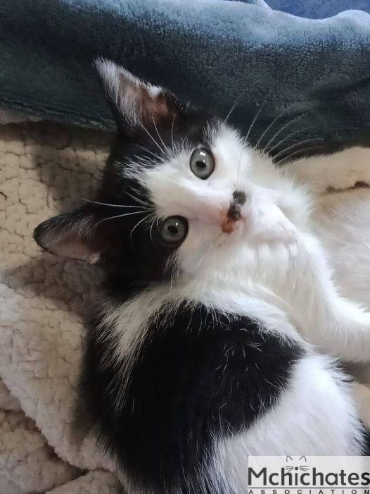 Chats A Adopter Mchichates Association Marocaine Pour La Protection Des Animaux Et De L Environnement